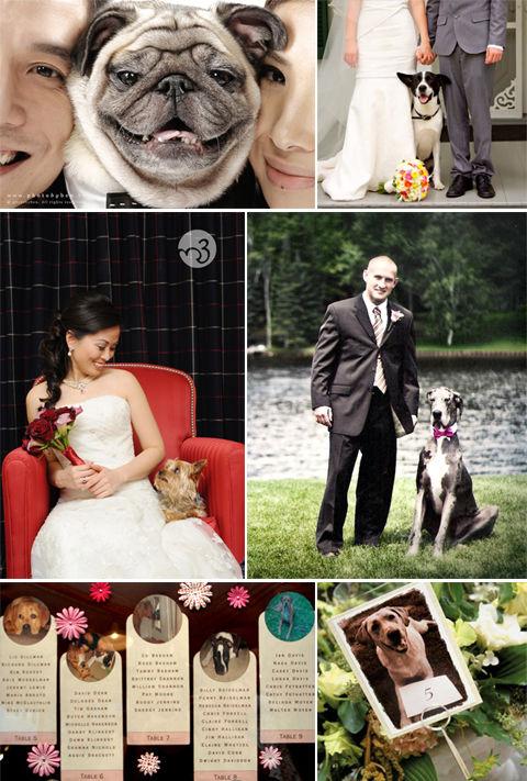 собачки на свадьбе