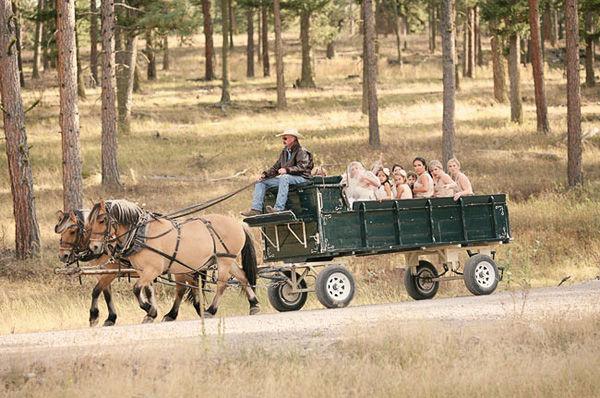 повозка с лошадьми на свадьбе