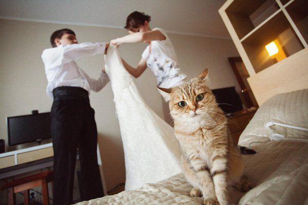 свадебные фотографии сборы