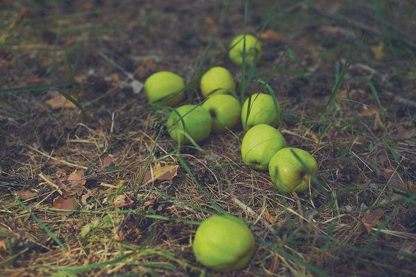 свадьба в стиле зеленое яблоко
