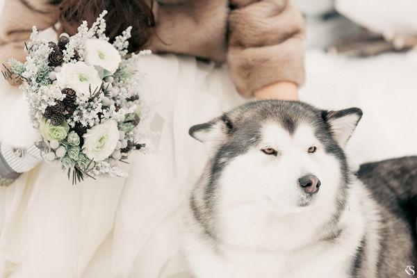 фотосессии с собаками хаски