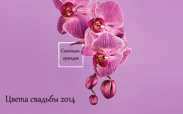 цвет свадьбы 2014