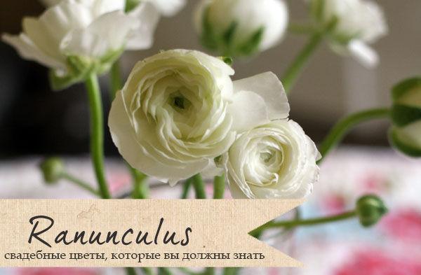 цветок ранункулюс