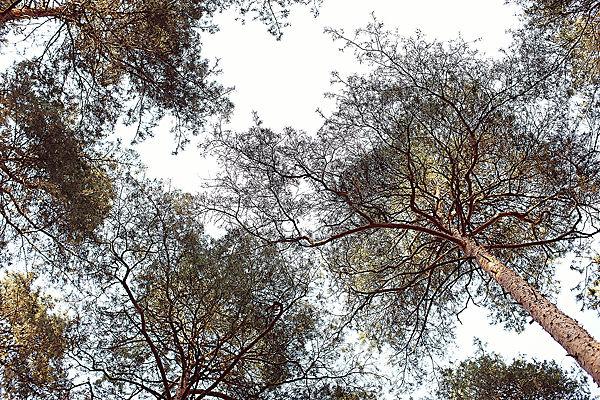 фотосессия на природе лавстори