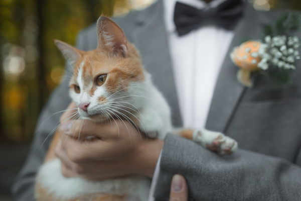 кот на свадьбе