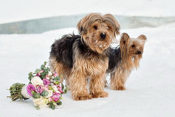 собаки на фотосессии