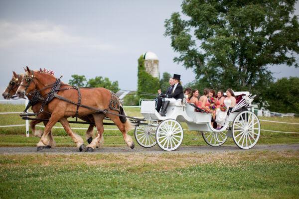 карета с лошадьми на свадьбе