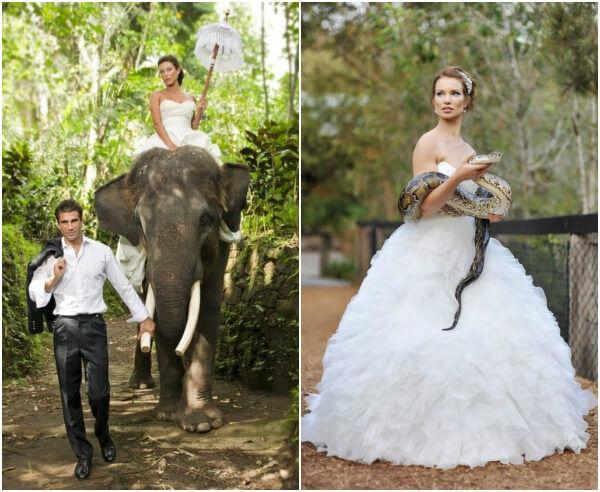животные на свадьбе экзотика