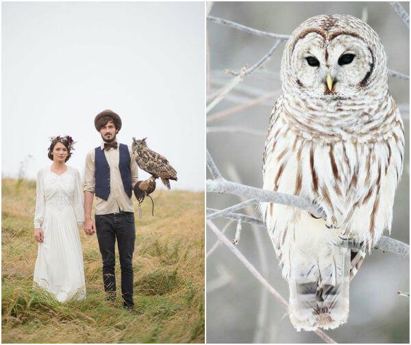 животные на свадьбе фото